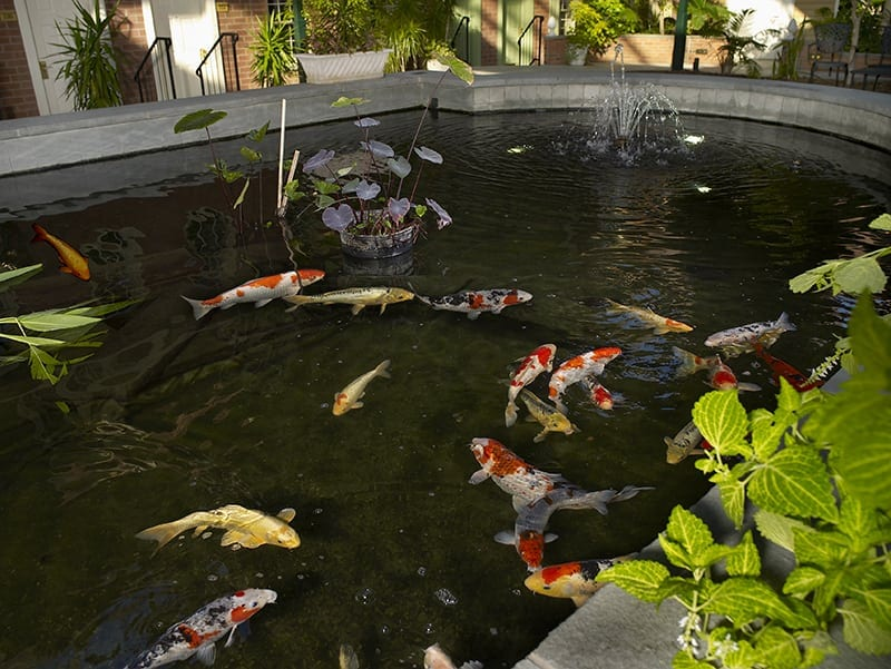 Photo gallery 360 view the desmond hotel albany for Koi pond york